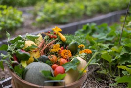 Fresh produce from garden at Cedar Crest Lodge