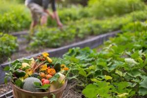 Vegetables form the garden