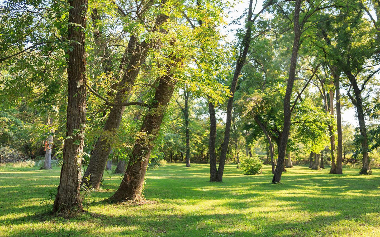 Beautiful Grounds at a Kansas B&B