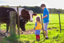 Kids Feeding Cow On A Farm