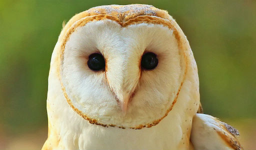 Things to Do in Kansas-National Wildlife Refuge Barn Owl