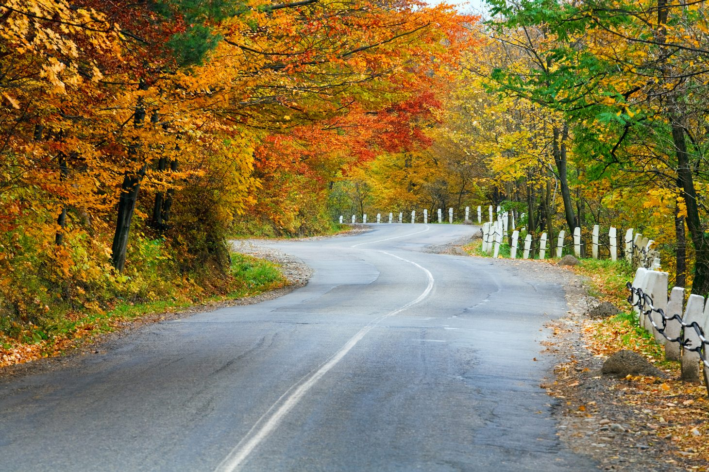 Fall foliage lining the winding road