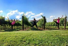 Things to See in Kansas-Islinglass Estate Vineyards